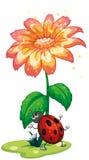 Un insetto sotto il fiore gigante Immagine Stock
