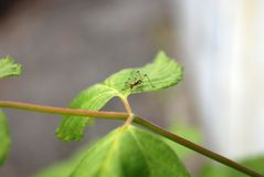 Un insetto su una foglia, un viaggio dell'insetto Fotografia Stock