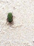 Un insetto verde Fotografia Stock Libera da Diritti