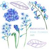 Un insieme con gli elementi floreali sotto forma di fiori blu dell'acquerello, fiorenti fiorisce (ortensia, miosotis) per una dec royalty illustrazione gratis