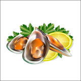 Un insieme da frutti di mare, cozze con i verdi Immagini Stock Libere da Diritti