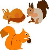 Un insieme degli scoiattoli che mangiano una nocciola e dormono testarosse Fotografia Stock