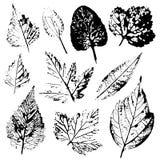 Un insieme dei bolli delle foglie reali dagli alberi e dai fiori Fotografia Stock