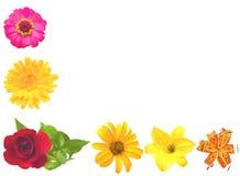 Un insieme dei fiori. Fotografia Stock