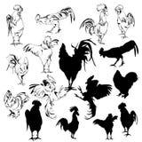 Un insieme dei galli delle siluette Immagine Stock