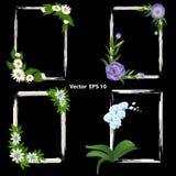 Un insieme dei telai per le foto decorato con i fiori - orchidea, passiflora, eustoma e camomilla immagini stock libere da diritti
