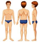 Un insieme del corpo maschio illustrazione di stock