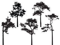 Un insieme del vettore della siluetta di cinque pini Immagini Stock Libere da Diritti
