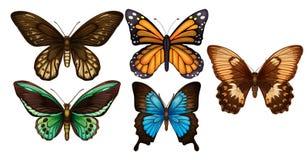 Un insieme della farfalla Colourful royalty illustrazione gratis