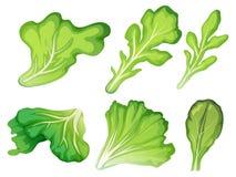Un insieme della foglia dell'insalata illustrazione di stock