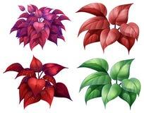 Un insieme della pianta Colourful royalty illustrazione gratis