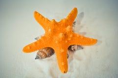 Un insieme delle conchiglie e delle stelle marine differenti Fotografia Stock