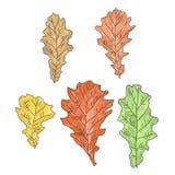 Un insieme delle foglie della quercia Fotografia Stock Libera da Diritti