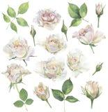 Un insieme delle rose per le congratulazioni illustrazione vettoriale