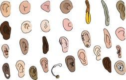 Un insieme di 29 orecchie Immagine Stock Libera da Diritti