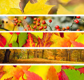 Un insieme di 5 bandiere dell'autunno differente Fotografie Stock