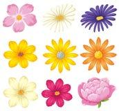 Un insieme di bello fiore royalty illustrazione gratis
