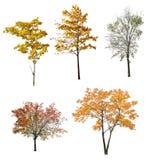 Un insieme di cinque alberi di autunno isolati su bianco Fotografie Stock