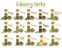 Un insieme di 15 erbe culinarie differenti nello stile del fumetto Illustrazione di vettore illustrazione di stock