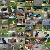 Un insieme di 48 foto degli animali Fotografia Stock Libera da Diritti