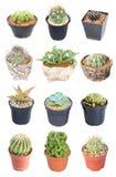 Un insieme di 15 piante in vaso del cactus di varietà. Immagine Stock