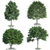 Un insieme di quattro alberi isolati contro bianco puro Fotografia Stock Libera da Diritti