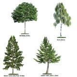 Un insieme di quattro alberi isolati contro bianco puro Immagini Stock