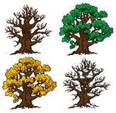 Un insieme di quattro alberi in varie fasi di sviluppo Immagine Stock