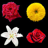 Un insieme di quattro fiori Fotografie Stock Libere da Diritti