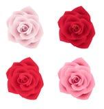 Un insieme di quattro rose di vari colori Fotografia Stock