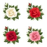 Un insieme di quattro rose di vari colori. Illustrazione. Immagini Stock Libere da Diritti