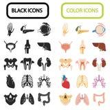 Un insieme di sedici organi umani e delle parti anatomiche colore ed icone piane nere Fotografie Stock Libere da Diritti