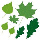 Un insieme di sette foglie verdi di vettore per la vostra progettazione illustrazione di stock