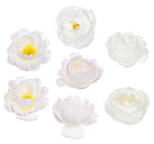 Un insieme di sette ha isolato le fioriture bianche del rovo Fotografia Stock