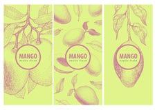 Un insieme di tre etichette con il ramo ed i frutti del mango Grande per tradizionale, alimento biologico, medicina, progettazion Immagine Stock