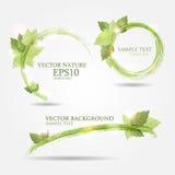 Un insieme di tre insegne con le foglie verdi fresche Immagini Stock Libere da Diritti