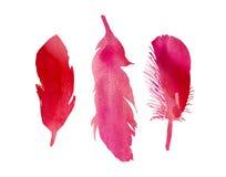 Un insieme di tre piume di uccello fucsia dell'acquerello di rossi carmini Immagine Stock