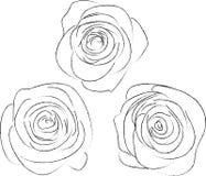 Un insieme di tre schizzi delle rose Immagini Stock