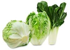Un insieme di tre varietà di lattuga fresca isolate su un fondo bianco Immagine Stock Libera da Diritti