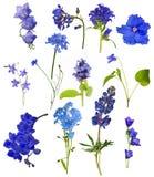 Un insieme di tredici fiori blu isolati su bianco immagine stock