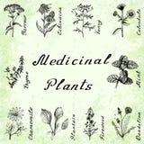 Un insieme di vettore di 10 piante - il millefoglio, l'echinacea, il tanaceto, la calendula, il timo, la menta, la camomilla, pla Fotografia Stock