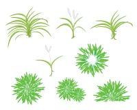 Un insieme isometrico dell'albero della pianta della dracaena Immagini Stock Libere da Diritti