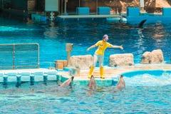 Un instructor no identificado de la mujer está mostrando delfínes Imagen de archivo libre de regalías