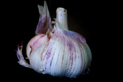 Un intero aglio bianco Fotografia Stock Libera da Diritti