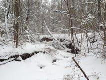 Un inverno del Missouri Fotografia Stock Libera da Diritti