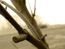 Un inverno mancante fotografie stock libere da diritti