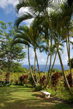 Un jardín botánico tropical Foto de archivo libre de regalías