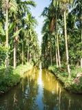Un jardín de la palma Foto de archivo libre de regalías