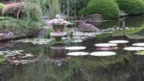 Un jardín japonés ajardinado en Australia almacen de video