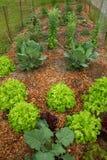 Un jardín orgánico urbano próspero Imagen de archivo libre de regalías
